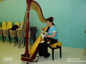 The tiger posed with a harpist who played at the Grand Opening in Lamballe, France.