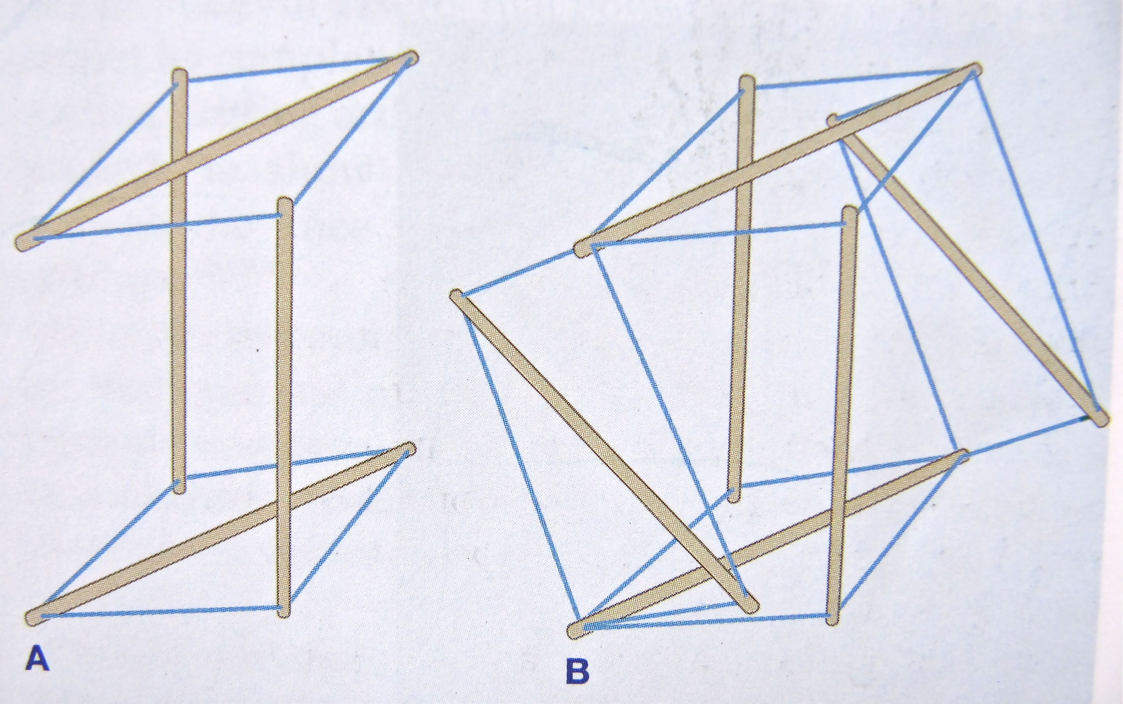 Notes On Anatomy And Physiology Getting The Feel Of Tensegrity