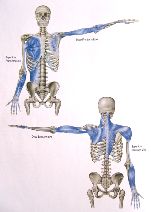 Notes On Anatomy And Physiology More On The Ties That Bind The